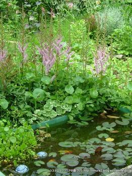 バックヤードの池